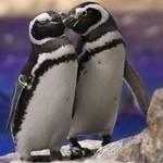 『恋する水族館。Sweet Penguins』