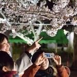 3/23(金)~4/8(日)開催 『さくらフェスタ』