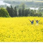 GWは「いいやま菜の花まつり」にでかけよう!|大阪市×まみたん子育てNEWS 市民交流姉妹都市「長野県飯山市」をご紹介