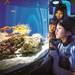 NIFREL(ニフレル)/京都水族館/姫路セントラルパーク/アドベンチャーワールド【家族で行きたい!関西の水族館&動物園】