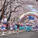 4/7(土)『相模原市民桜まつり』