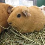 大阪市|おでかけイベント情報 動物園・図書館・行政イベント【4月11日更新】