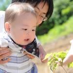 第33回 ピジョン赤ちゃん 誕生記念育樹キャンペーン