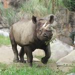 大阪市|おでかけイベント情報 動物園・図書館・行政イベント【5月2日更新】