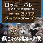 ロッキーバレー~北アメリカの動物たち~ 王国初となる猛獣たち