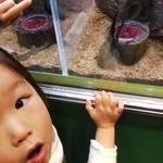兵庫県伊丹市|伊丹市昆虫館 周辺スポットは?どんな虫がいる?雨の日におすすめ?ママのクチコミ