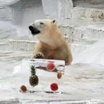 大阪市|おでかけイベント情報 動物園・図書館・行政イベント【7月11日更新】