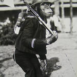 大阪市|おでかけイベント情報 動物園・図書館・行政イベント【7月25日更新】