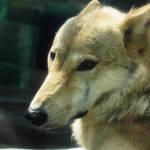 大阪市|おでかけイベント情報 動物園・図書館・行政イベント【8月15日更新】