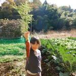 「町田市|11/24(土) 晩秋の小野路の里山で 秋野菜の収穫体験ができる!」
