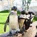 【福岡市版】2019年4月12日発行 新年度号「動物園へ行こう」プレゼント