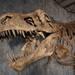 東京・上野 | 恐竜額の新時代を作った重要標本が一堂に集まる『恐竜博2019』7/13(土)開催!
