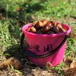 茨城県 | 秋の味覚「栗」拾いに行こう!