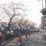 【中止】東京・南馬込│4/5(日)開催!『第30回馬込文士村大桜まつり』
