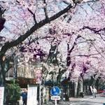 東京・成城│4/4(土)・5(日)開催! 『成城さくらフェスティバル2020』
