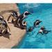 【狭山市】 智光山公園こども動物園の ペンギンに会いに行こう!
