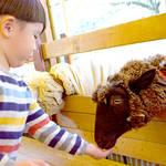 子どもの心を育む!動物とのふれあいについて教えて!ママのクチコミアンケート
