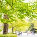大阪市|大阪市・図書館・動物園情報【6月16日更新】vol.1