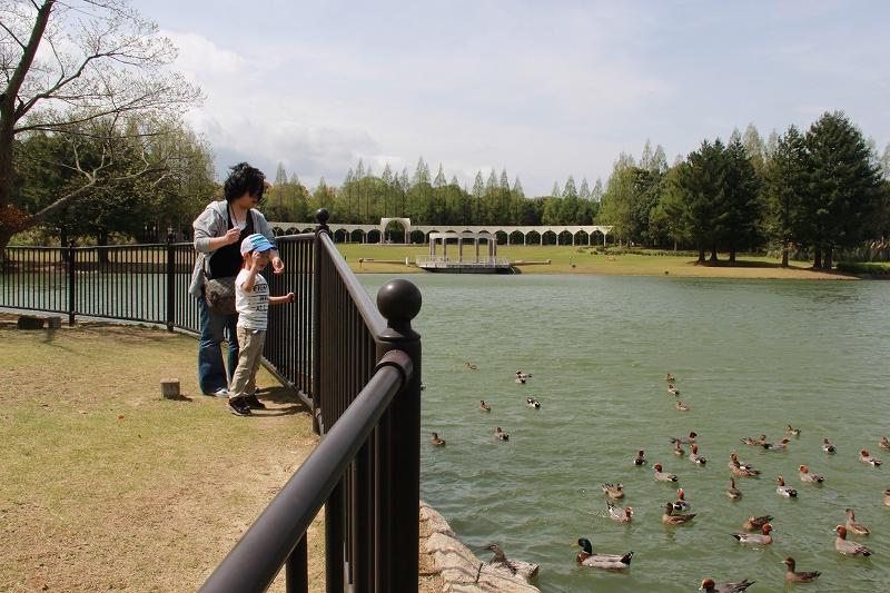 公園内にある大池にて