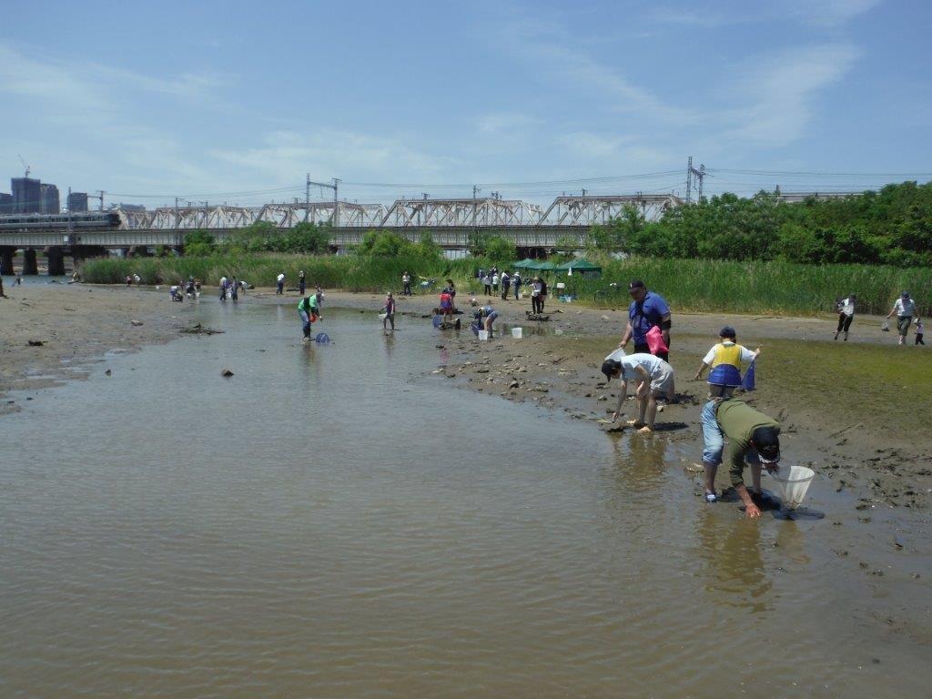 川に棲んでいる生き物の探索