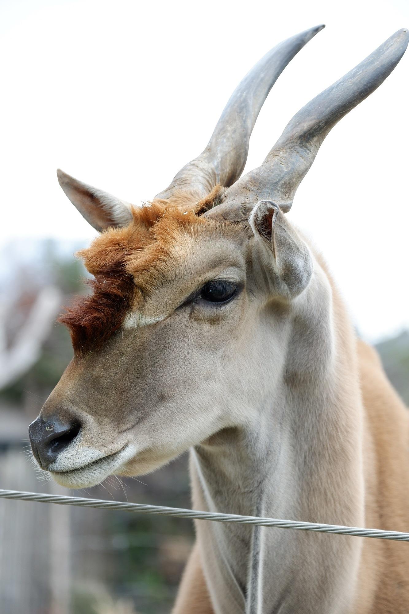 アフリカサバンナゾーンの草食動物ガイド