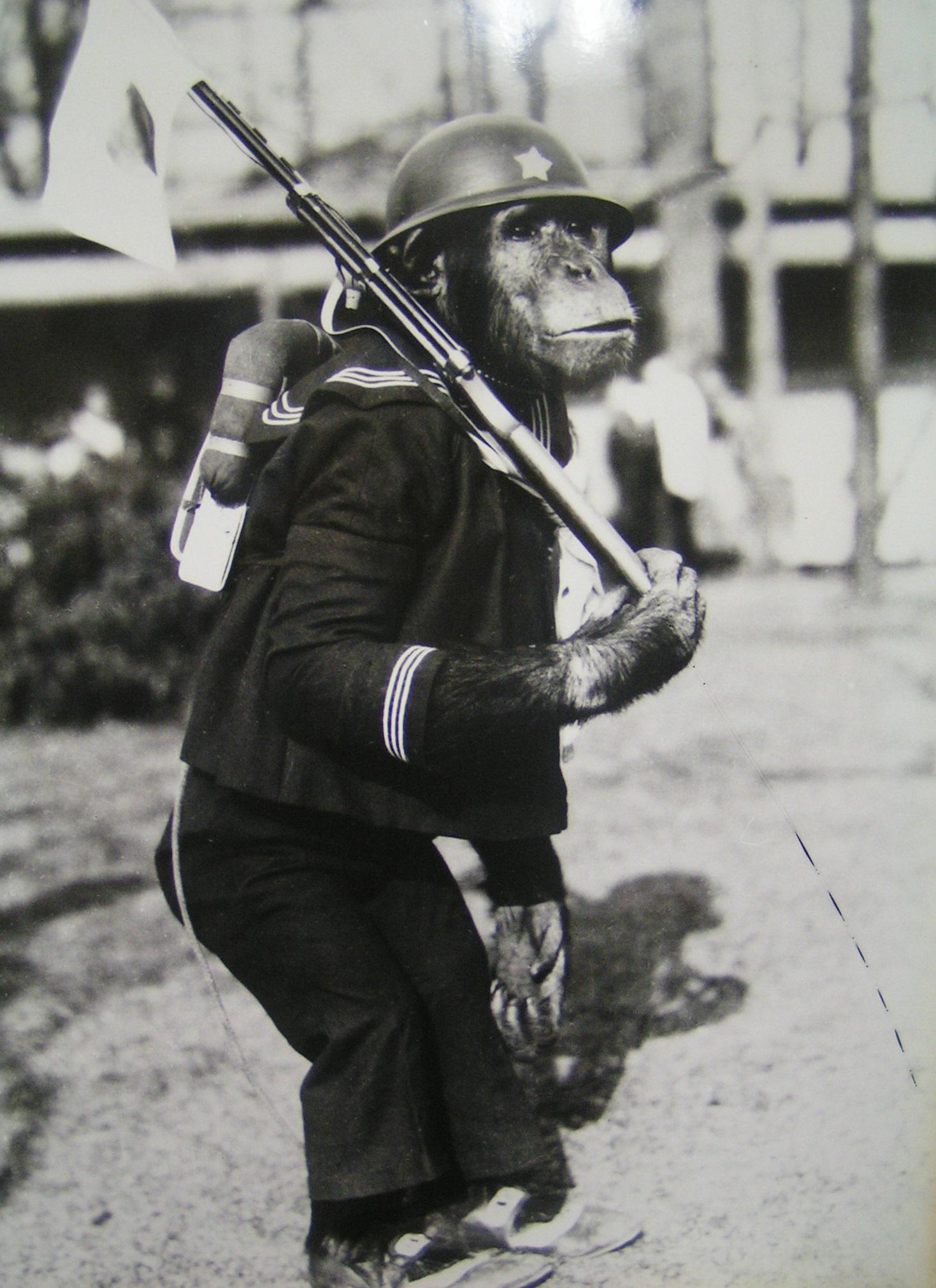 戦意高揚のための宣伝に利用されたチンパンジーの「リタ」