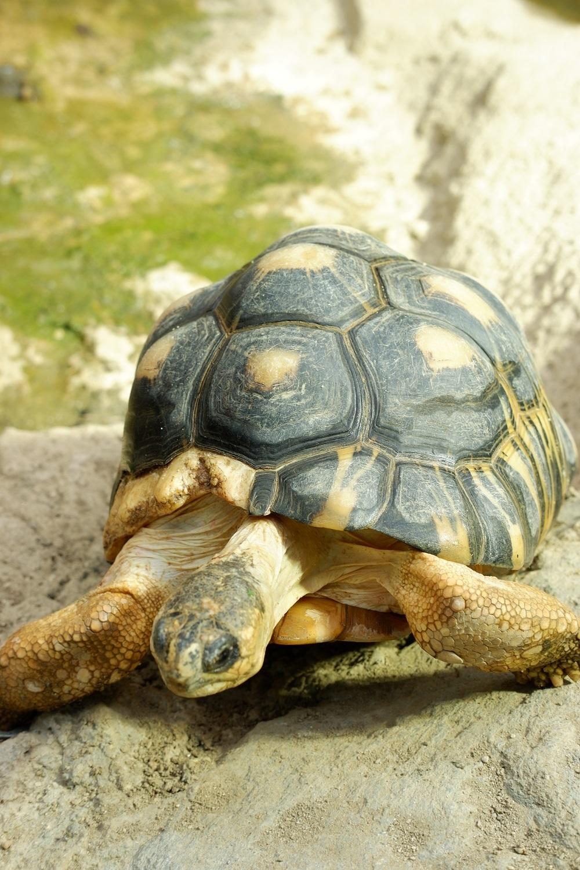 爬虫類生態館「アイファー」日替わりガイド