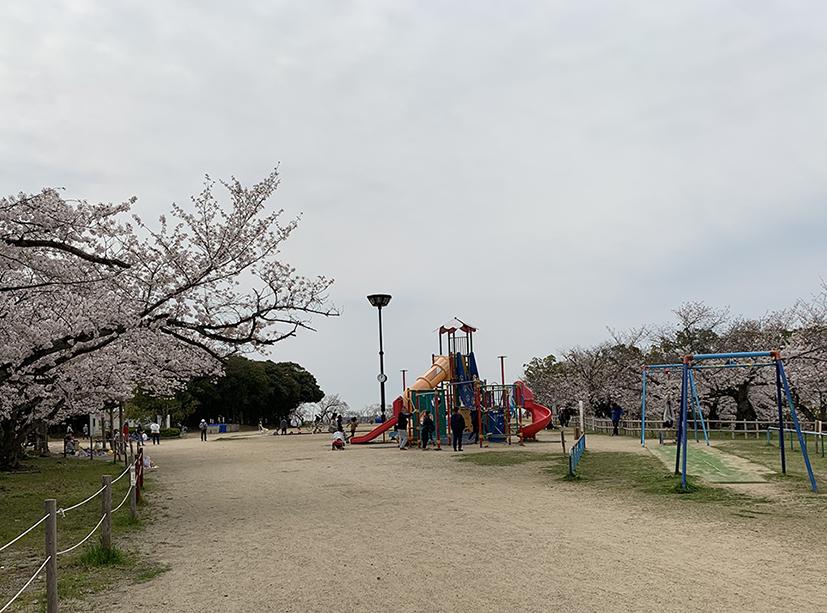 桜をモチーフにした複合遊具横にはターザンロープもありました