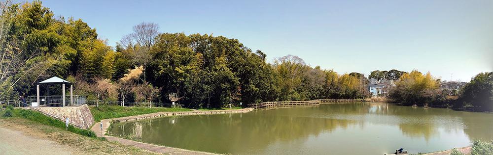 ハスの花が観賞できる親水デッキのある池