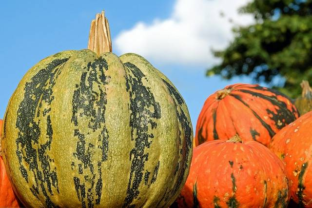 Free photo: Pumpkin, Fig Leaf Gourd - Free Image on Pixabay - 2740305 (14388)